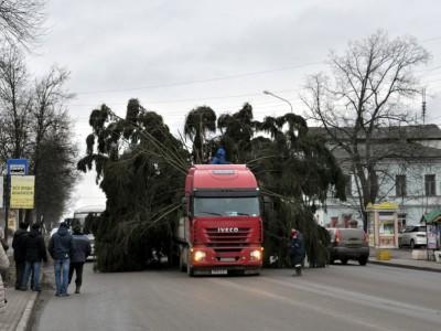 В Углич доставили Новогоднюю елку