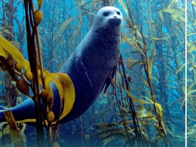 В Угличе откроется юбилейная фотовыставка о подводном мире